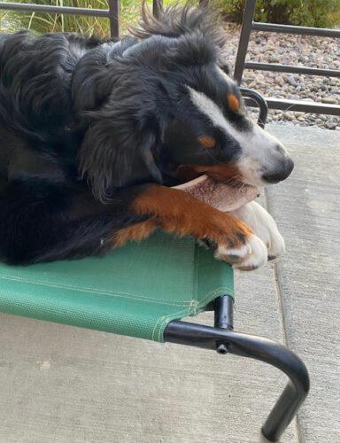 Split Premium Elk Antler Dog Chew photo review