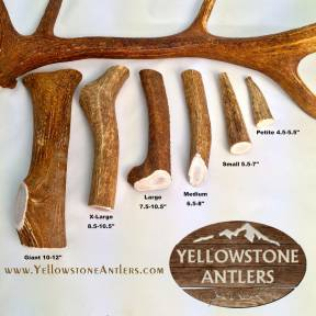 Giant Whole Elk - Dog Chews