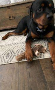 OLD FAITHFUL MEGA - Premium Elk Antler Chews photo review