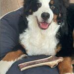 GIANT QUARTER-SPLIT Elk Antler Dog Chew - Wholesale photo review